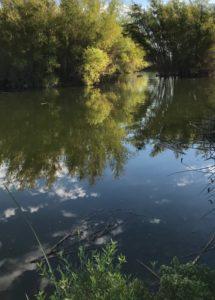 reflecction-new-photo
